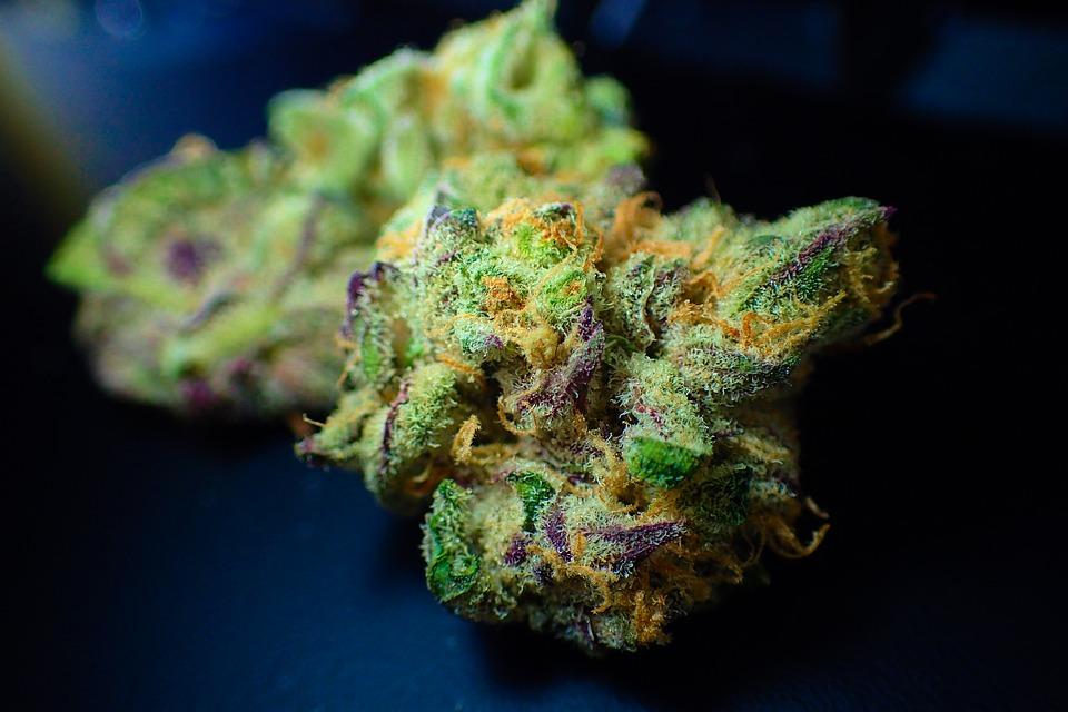 cannabis-bud-close-up