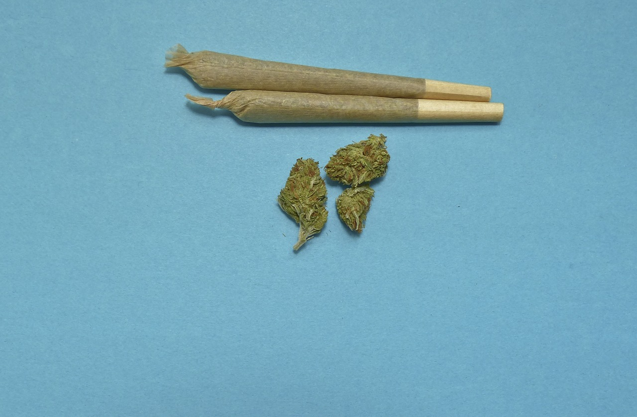 Two neatly rolledmarijuana joints and a couple buds