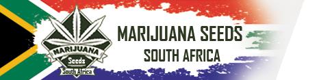 marijuana-seeds-sa