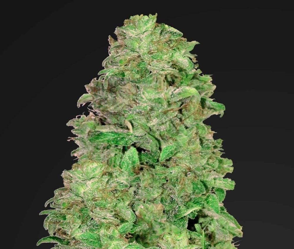cbd-flower-20-1-fb
