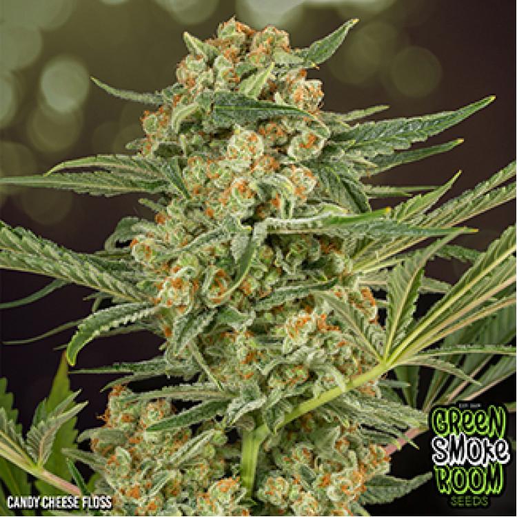 Green Smoke Room Seeds - Candy Cheese Floss